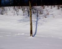 Beschatten Sie Baum im Schnee, der auf der Autobahn auf einem Parkplatz A45 genommen wird Lizenzfreie Stockfotografie