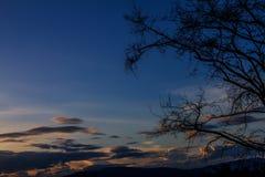 Beschatten Sie Niederlassungen und Himmel bei Sonnenuntergang als der Hintergrund Lizenzfreie Stockbilder
