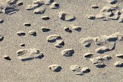Beschattete Sandamöbe tauchen vom sandigen Strand auf Stockbilder