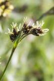 Bescheiden wildflowers Stock Foto's