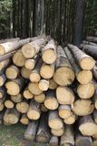 Bescherm het bos Royalty-vrije Stock Fotografie