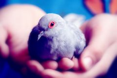 Beschermde weinig vogel Stock Foto's