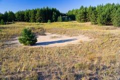 Beschermende bosaanplantingen Royalty-vrije Stock Foto