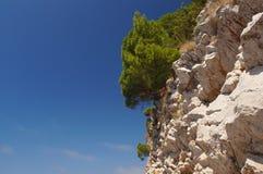 Beschermer van de horizon Montenegro, met een mooi geurig pijnboombos stock foto's