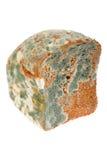 Beschimmeld Brood Stock Afbeelding