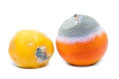 Beschimmeld rot sinaasappel en citroenfruit Stock Foto's