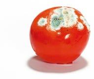 Beschimmelde Tomaat Stock Foto's