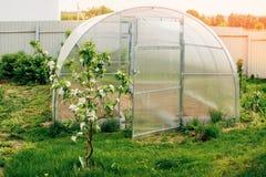 Beschleunigte Bearbeitung des Gemüses im Gewächshaus im Land stockfoto