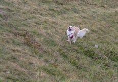 Beschleunigung des Hundes von einem stehenden Start stockbilder