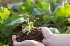 Beschmutzen Sie bebauten Schmutz, Erde, Boden, Landwirtschaftslandhintergrund Stockfotografie