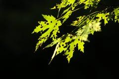 Beschmutzte Blätter Stockfotografie