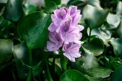 Beschmutzte Blume sehr schön lizenzfreie stockfotografie