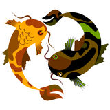 Beschmutzte dekorative Fische, die unter Wasser tanzen Lizenzfreie Stockbilder