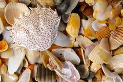 Beschmutzte rote Krabbe Shell auf Strand Stockbild