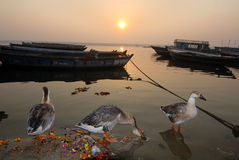 Beschmutzter Fluss Ganga Lizenzfreies Stockfoto