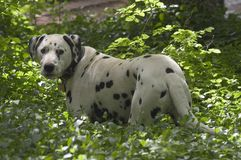 Beschmutzter Hund Stockfoto