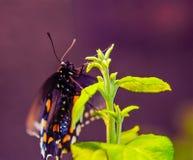 Beschmutzter Schmetterling auf einer Grünpflanze Lizenzfreie Stockbilder