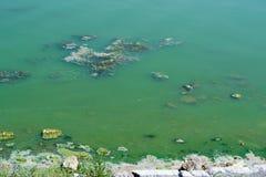 Beschmutzter Teich Lizenzfreies Stockfoto