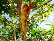 Beschmutztes cuscus Stockfotografie