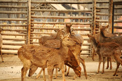 Beschmutztes Deers Lizenzfreie Stockfotografie