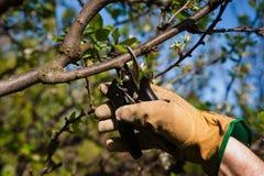 Beschneidung, arbeitend im Garten Stockfoto