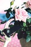 Beschneidung der Rosen stockbild