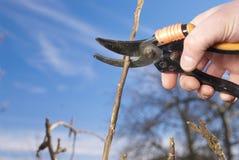 Beschneidung ein Apfelbaum Lizenzfreie Stockbilder