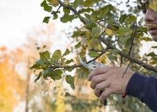 Beschneidung von Bäumen stockfotografie