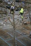 Beschneidungbäume Stockfoto