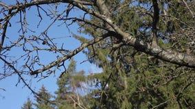 Beschneidungsbäume und -sträuche stock video footage