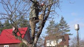 Beschneidungsbäume und -sträuche stock video