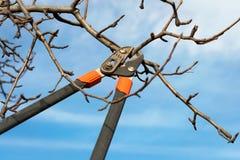 Beschneidungsbaumbrunch mit Beschneidungsscheren Lizenzfreies Stockbild