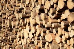 Beschnittene Bäume Lizenzfreies Stockfoto