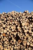 Beschnittene Bäume Lizenzfreies Stockbild
