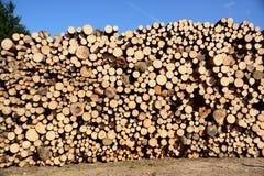 Beschnittene Bäume Lizenzfreie Stockbilder