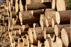 Beschnittene Bäume Lizenzfreie Stockfotos
