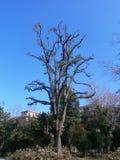 Beschnittener Baum Stockbilder