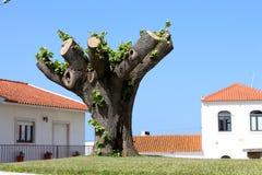 Beschnittener Baum Lizenzfreie Stockbilder