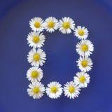 Beschriften Sie D von den weißen Blumen, Gänseblümchen, Bellis perennis, Nahaufnahme, auf blauem Hintergrund Lizenzfreies Stockfoto