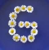 Beschriften Sie G von den weißen Blumen, Gänseblümchen, Bellis perennis, Nahaufnahme, auf blauem Hintergrund Lizenzfreie Stockfotografie