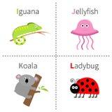 Beschriften Sie I J K L Leguan-Quallen-Koala-Marienkäfer-Zooalphabet Englisches ABC mit Tiere Bildungskarten für Kindweißrückseit Lizenzfreie Stockfotos