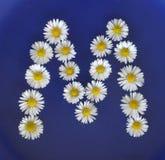 Beschriften Sie M von den weißen Blumen, Gänseblümchen, Bellis perennis, Nahaufnahme, auf blauem Hintergrund Stockfotos