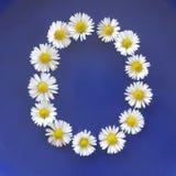 Beschriften Sie O von den weißen Blumen, Gänseblümchen, Bellis perennis, Nahaufnahme, auf blauem Hintergrund Stockfotos