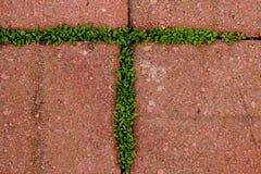 Beschriften Sie T, die durch das Moos gebildet wird, das zwischen Ziegelsteinen wächst Stockbild