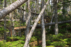 Beschriften Sie A von den bloßen Baumstämmen Stockbild