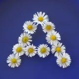Beschriften Sie A von den weißen Blumen, Gänseblümchen, Bellis perennis, Nahaufnahme, auf blauem Hintergrund Lizenzfreies Stockfoto