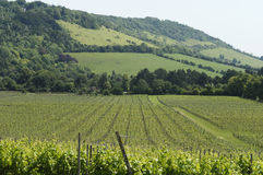 besegrar den norr uk-vingården för foten Arkivfoton