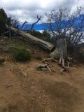 Besegrat träd Arkivfoto