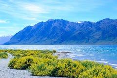Besen, der am See Hawae blüht Stockfoto