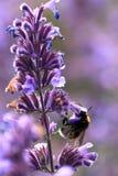 Besetzte Biene Lizenzfreies Stockfoto